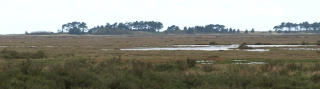 Marshes at Wells-Next-the-Sea, Ruth's Coastal Walk