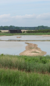 Minsmere Level - bird watching paradise - on Ruth's coastal walk