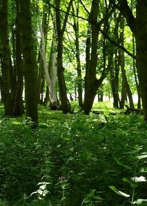 walking in woods, Dunwich Forest - Ruths coastal walk in Suffolk