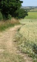 Well maintained footpath - near Great Oakley, Ruths coastal walk