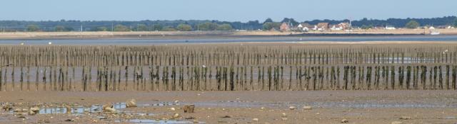 Sea defences, Mersea, Ruth's coastal walk