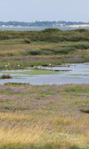 Across marshes, looking towards Mersea Island - Ruths coastal walk, uk.