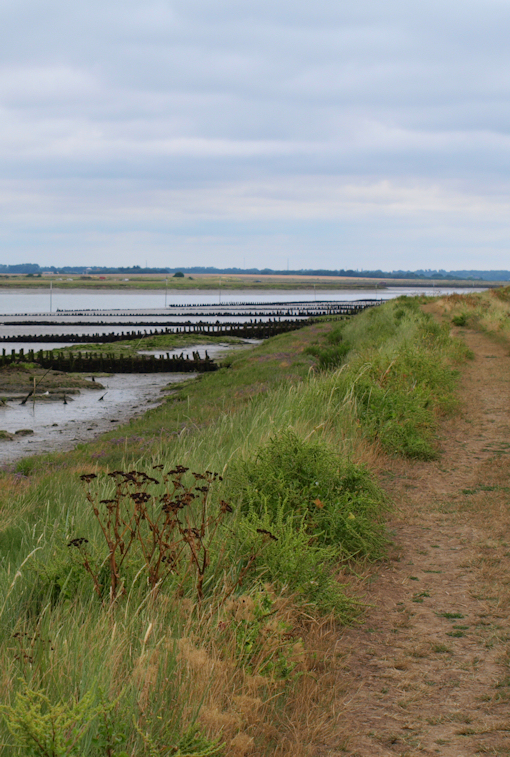 Path towards The Strood causeway, Ruth's coastal walk.