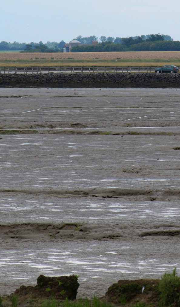 View of The Strood causeway, to Mersea - Ruths coastal walk