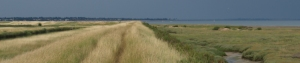 Storm clouds brewing, Tollesbury Wick Marshes, Ruth's coastal walk in Essex