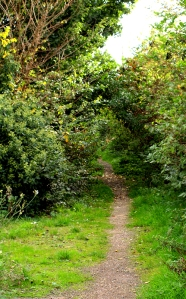 Footpath through Rochford, Essex. Ruth's coastal walk