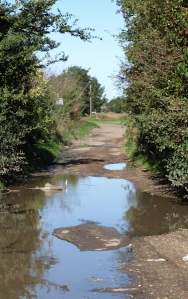 Flooded path, Ruths coastal walk, Essex