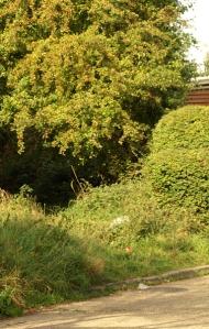 Overgrown path, Benfleet. Ruth's coastal walk, Essex.