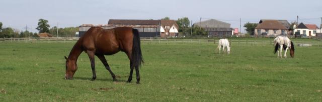 Horses, Ruths coastal walk