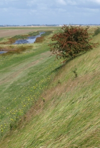 Endless wall, Tillingham Marshes, Ruth's coastal walk