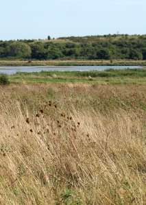 Vange Marshes, Essex. Ruth's coastal walk.