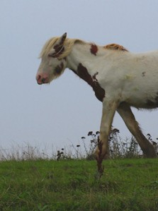 Pony on River Bank, Thames, Kent. Ruth's coastal walk.