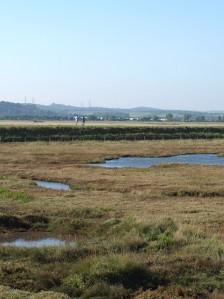 St Mary's Marshes, Kent, Ruth's coastal walk