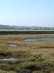 St Mary's Marshes, Kent, Ruth's coastal walk