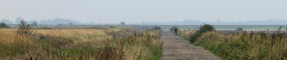 Cliffe Marshes nature reserve, Kent. Ruths coastal walk.