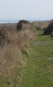 Path along the bank, The Swale, Kent. Ruths coastal walk.