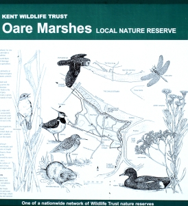 Oare Marshes, nature reserve, Kent, Ruth's coastal Walk.