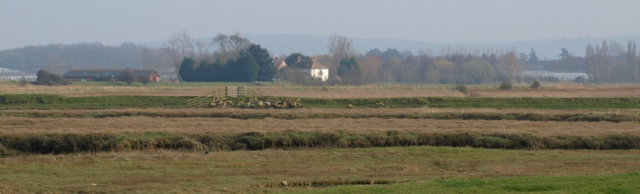 View across Ham Marshes, Faversham, Kent. Ruths coastal walk.