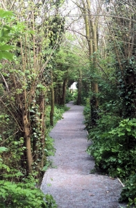 path through wooded gully, Ruth's coastal walk