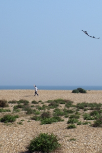 Boy flying shark kite, Deal, Ruths coastal walk.