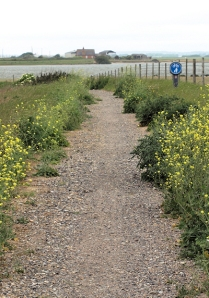 Cycle track, Lydd to Camber, Ruths coast walk