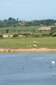 View across Pett Level, Ruth's coastal walk.