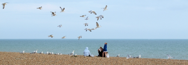 Seagulls on beach at Hastings, Ruth's coastal walk.