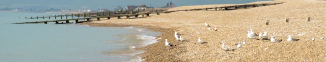 Gulls in Norman's Bay, Sussex. Ruth's coast walk