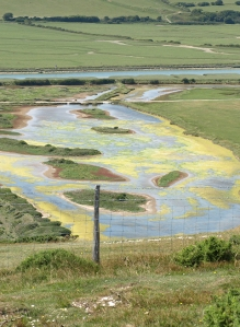 Algae in lagoons - Seven Sisters Country Park, Ruth's coastal walk