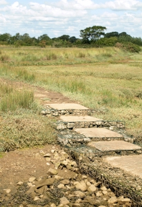 Path across Pagham harbour, Ruth walks round the coast, Sussex