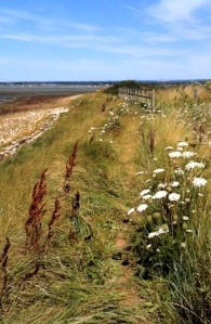 Path along sea wall with flowers, Chidham Point, Ruth's coast walk. Sussex