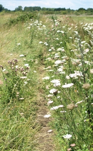 Path with flowers, Pagham Bay, on Ruth's coastal walk through Sussex
