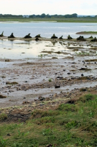 14 Pagham Harbour (2) - Ruth's coastal walk, Bognor Regis