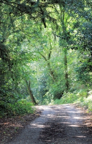 wooded path - Solent Way - From Hythe to Fawley, Ruth's coast walk