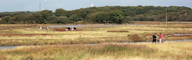 Lepe, view inland, New Forest, Ruth walks around the coast.