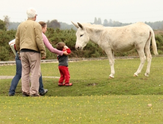 donkey and little boy, New Forest, Ruth's coastal walk.