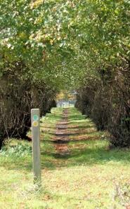 Forest avenue, South Baddesley, Ruth walks somewhere near the coast