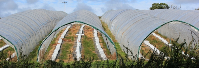plastic tunnels, approaching Lymington, Ruth walks round the coast