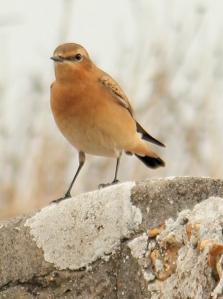 bird again - Hurst Castle, Ruth's coast walk