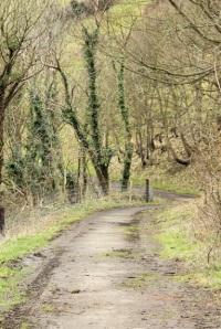 wood walk from Hill Bottom to Kimmeridge Bay, Ruths coastal walk.