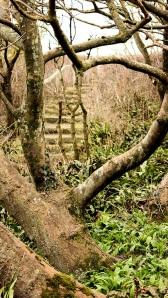 woods, Ruth's walk along the South West Coast Path, Dorset.