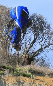 Hang glider caught in the tree, Ruth walks the South West Coast path