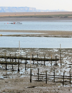 oyster beds and Chesil Beach, Ruth's coast walking