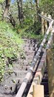 steep path - up from Lyme Regis, Ruths coastal walk
