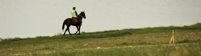 horse, South West Coast Path, Fleet, Ruth walking round the uk.