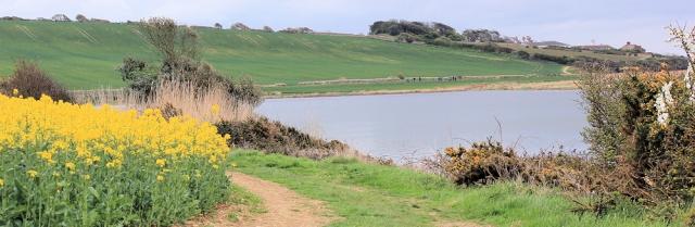 Rape field - South West Coast Path, near Langton Herring, Ruths walk.