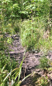 wild path - Lyme to Seaton, Ruths coast walk around the UK