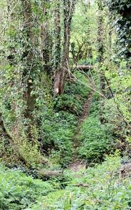 footpath through Wyke Wood, Dorset, Ruth's coast walking.