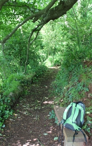 wooded walk to Oddicombe Beach, South West Coast Path, Ruth in Devon