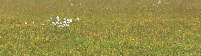 wild flowers - Berry Camp, Devon, Ruth's coast walking.